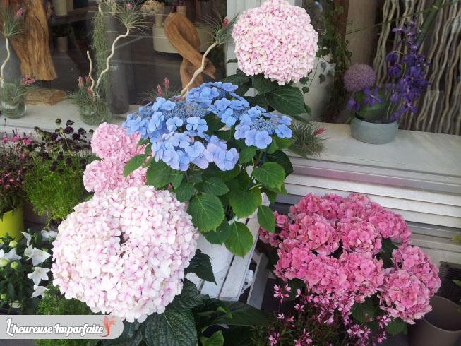 fleuriste hortensia_wip1