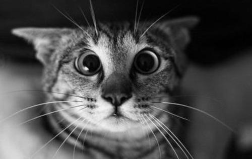 """Résultat de recherche d'images pour """"chat drole qui saute"""""""