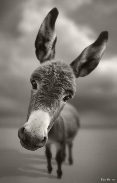 portrait en noir et blanc par Ben Heine via pinterset
