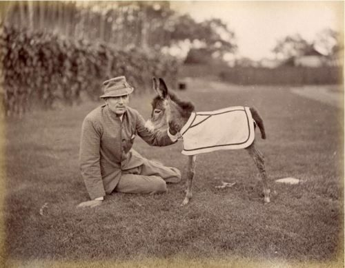 ca. 1870, [portrait of a gentleman and a baby donkey from the Shanghai Race Club & Amateur Circus]