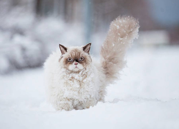 chat neige 1