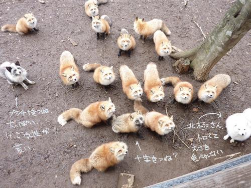 fox19 by kuro-risu on Flickr