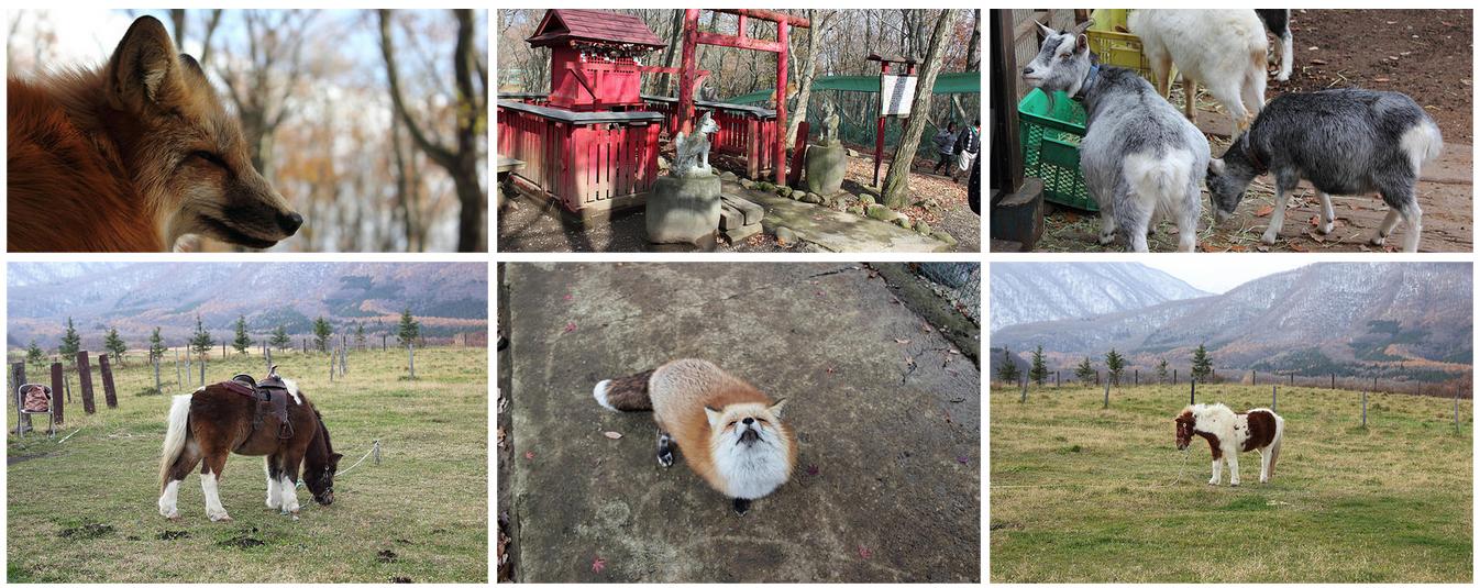 galerie de photos de Zao Fox Village sur Flickr